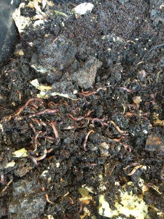 worm-8